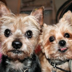 Remembering My Boys on National Pet Memorial Day