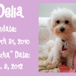 Introducing….Delia!