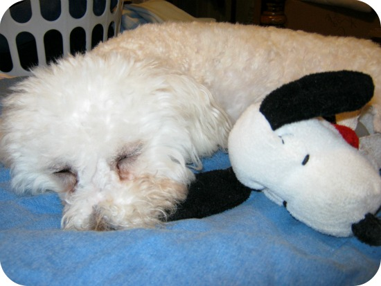 Delia+and+snoopy+sleeping1