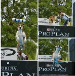 Wordless Wednesday: Nathan Jr. at the Incredible Dog Challenge