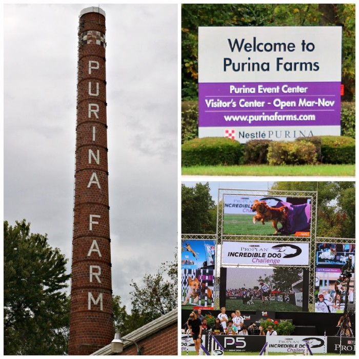 Purina-Farms-Incredible-Dog-Challenge
