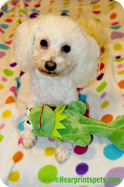 Delia and Kermit the frog