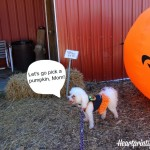 Delia's First Pumpkin Patch and Corn Maze Adventure