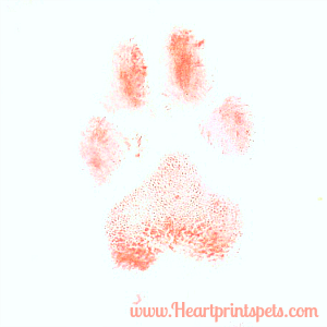 Delia's pawprint in ink ready for tattoo