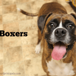 B is for Boxers