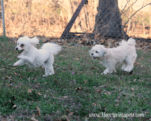 Delia and Chewy running 3