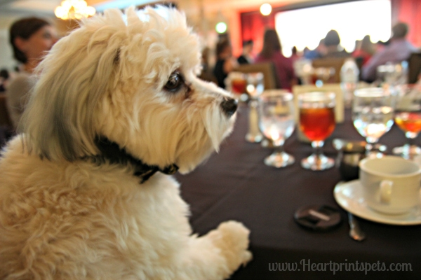 Chewy at nose to nose awards BlogPaws 2015