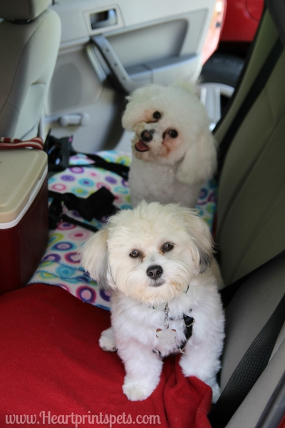 Delia and Chewy ready to leave for BlogPaws