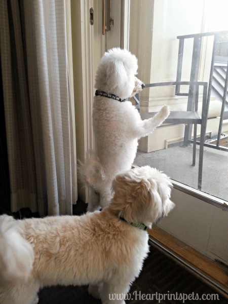 Delia and Chewy watching other bloggers arrive