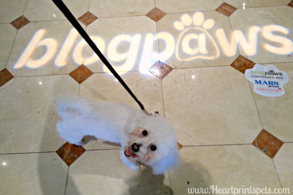 BlogPaws Nashville 2015 Recap