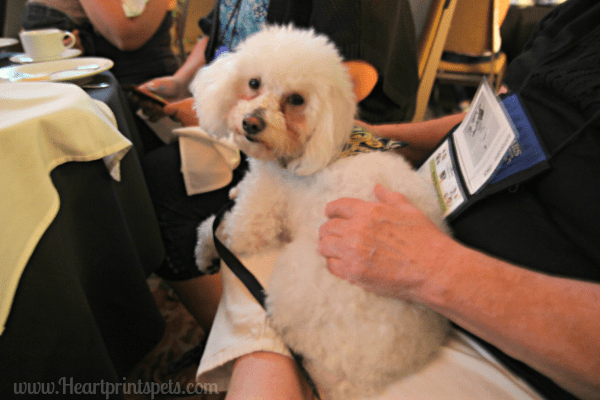 Delia at Nose to Nose Awards BlogPaws 2015