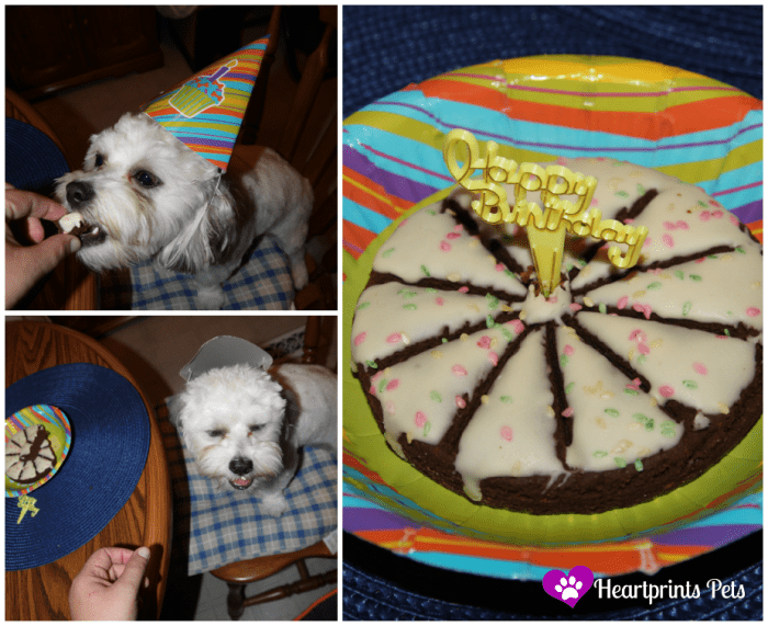 Chewy Birthday Collage