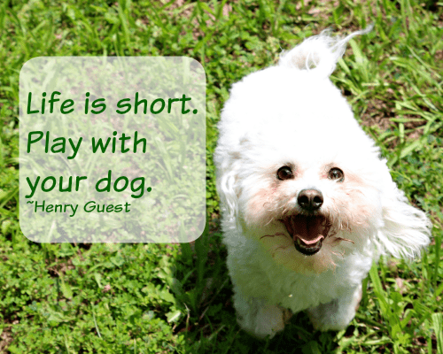 Life is short Play with your dog-Henry Guest