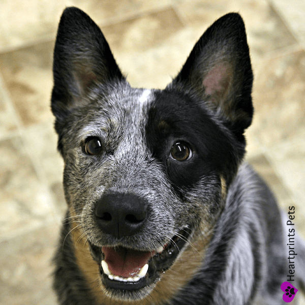 Johnny Portrait-A Howlin' Good Time Doggie Daycare and Pet Hotel