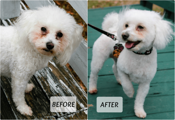 Delia Before and After PetSmart Grooming