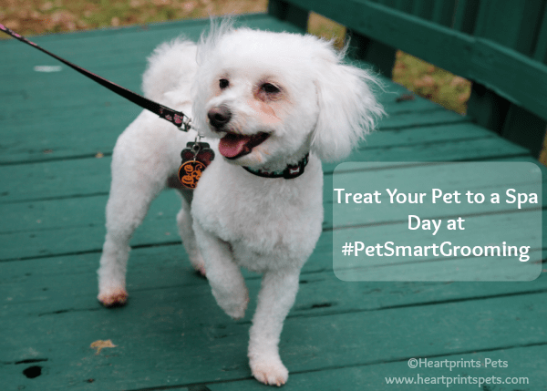 Treat Your Pet to a Spa Day at #PetSmartGrooming