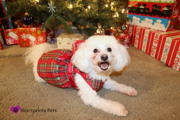 Get Your Pet Ready for Holiday Magic with #PetSmartGrooming