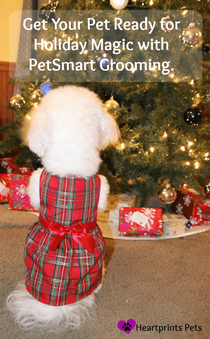 Delia ready for holiday magic with #PetSmartGrooming