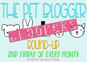 The-Pet-Blogger-Bloopers-Round-Up