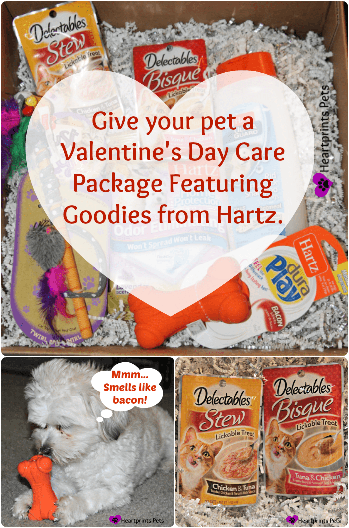 Give your pet a valentine's day care package featuring goodies from hartz