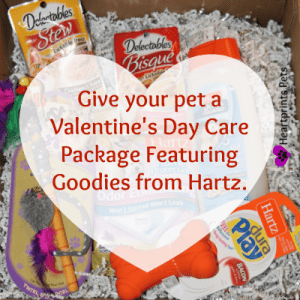 Give your pet a valentine's day care package featuring goodies from hartz sm