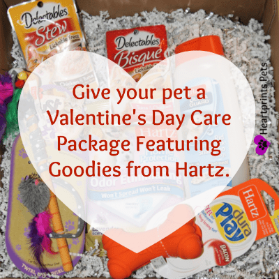 Give Your Pet A Valentine's Day Care Package from Hartz #BabbleBoxx