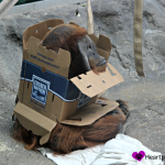 Wordless Wednesday- A Few Treasures at the St. Louis Zoo