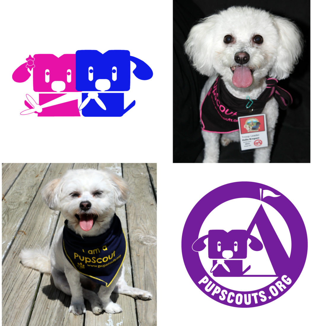 Introducing PupScouts Org Troop 314