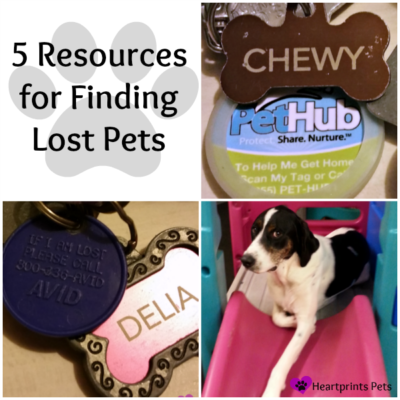 5 Resources for Finding Lost Pets