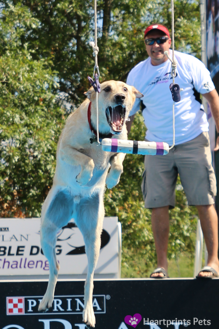 Purina Pro Plan Incredible Dog Challenge 2014 Diving Dog Competition