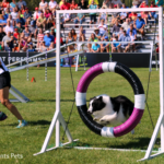 19th Annual Purina Pro Plan Incredible Dog Challenge Finals Preview