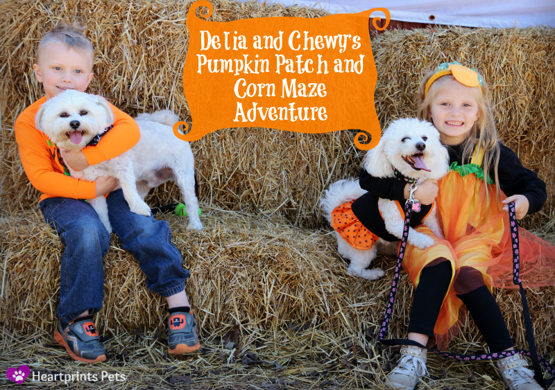 Delia and Chewy's Pumpkin Patch and Corn Maze Adventure