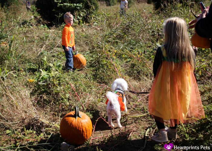 delia-and-kids-in-pumpkin-patch