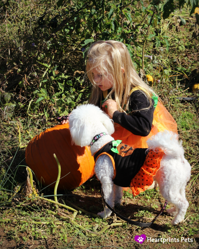pet friendly pumpkin patch and corn maze