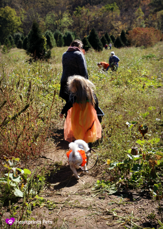 delia-and-her-friend-exploring-the-pumpkin-patch