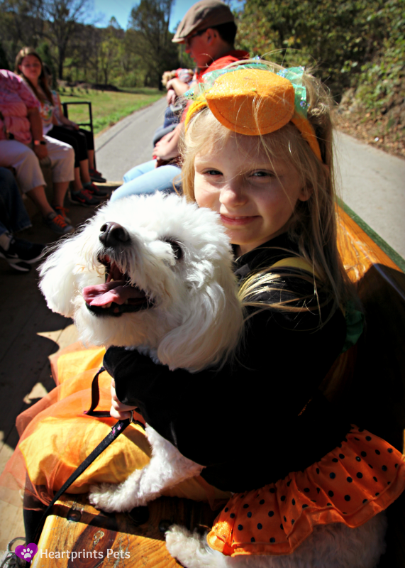 Dog Friendly Hay Ride