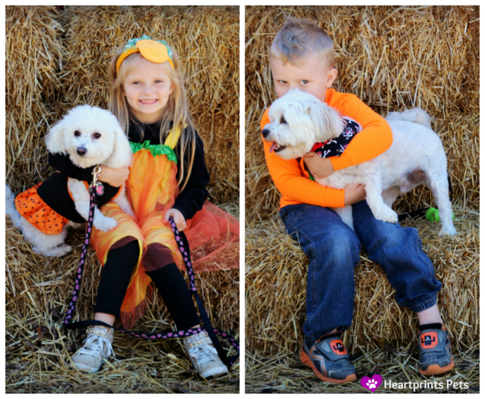 Delia and Chewy at Pet Friendly pumpkin patch with kids