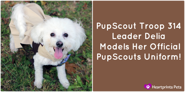 PupScouts Troop 314 Leader Delia Models her official uniform