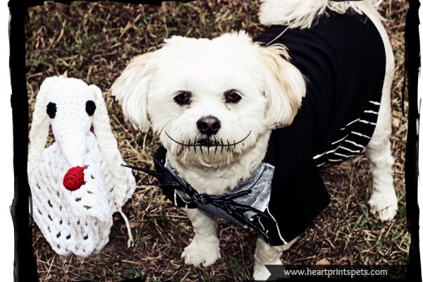 the nightmare before christmas jack and sally diy dog costumes